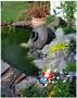 colour photo of garden pond
