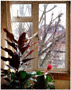 colour photo of garden through window