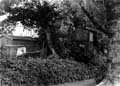 b&w photo tree house in back garden from park