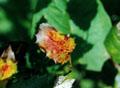 Holly leaf close-up