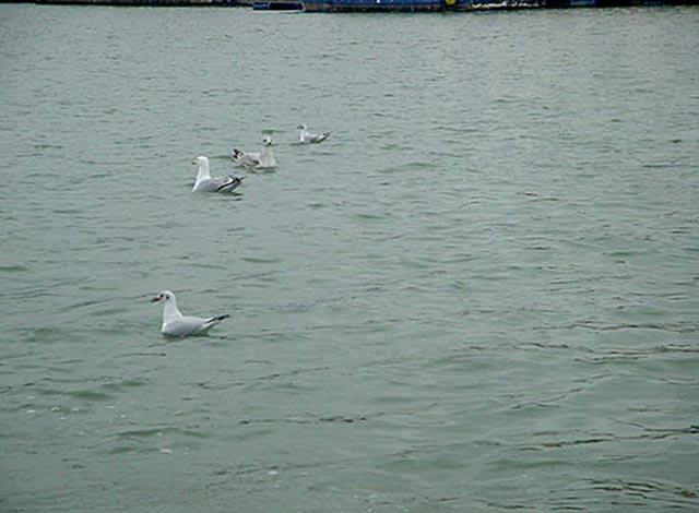ferry bristol boat dock boats water sea gulls